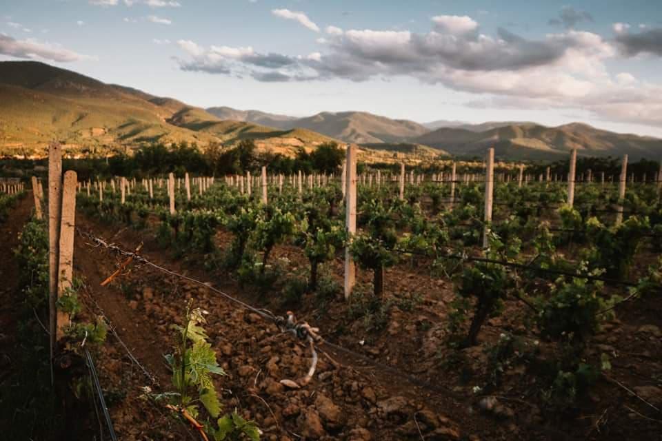Bulgarian winemakers around the world - Nana Sukara