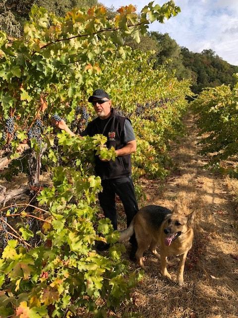 Bulgarian winemakers around the world - Miro Cholakov