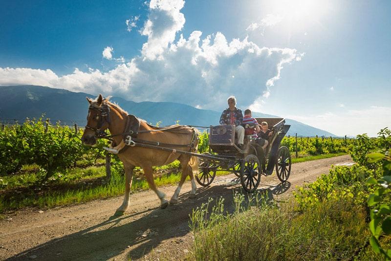 Време е за гроздобер 2020 в Шато Копса